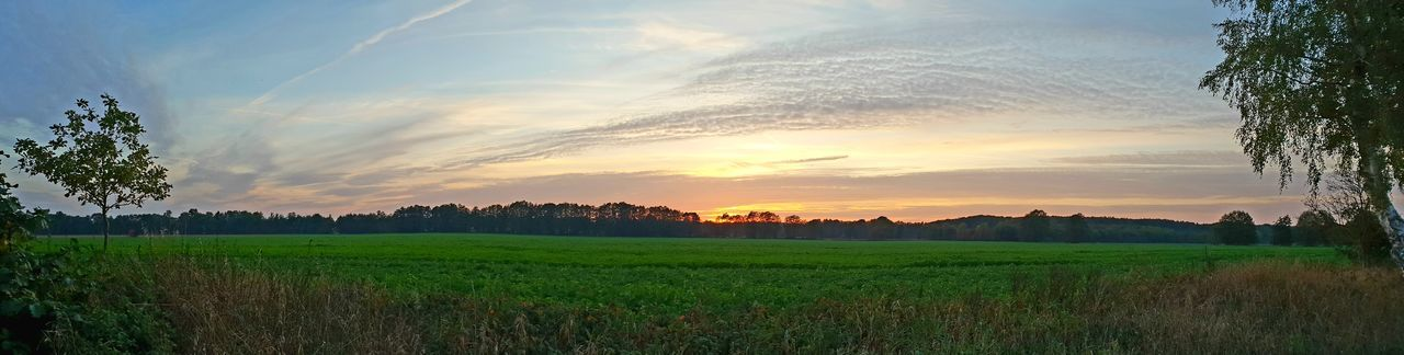 Panoramic View of sunset sky with forest in back- and field and grass in foreground. Panoramic View Panoramic Photography Panoramic Landscape EyeEm Selects Blue Sky White Clouds Blue Sky And Clouds Postcard Landscape Tree Sunset Agriculture Field Sky Landscape Grass Cloud - Sky Lush - Description Cultivated Land Farmland Agricultural Field