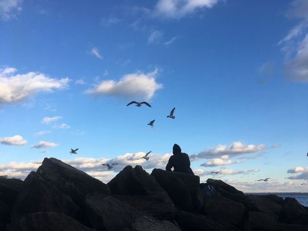Silhouette of man siting on rocks feeding fish to seagulls on the beach at dusk. Man in a hoodie throws fish into the air which seagulls catch and eat. Blue sky, clouds, silhouette of birds in flight. Animal Themes Animal Wildlife Animals In The Wild Beauty In Nature Bird Coney Island Coney Island / Brooklyn NY Coney Island Beach Flying Nature Outdoors Seagull Seagulls Seagulls And Sea Seagulls At The Lake Seagulls Flying Seagulls In Flight Seagulls, Beach