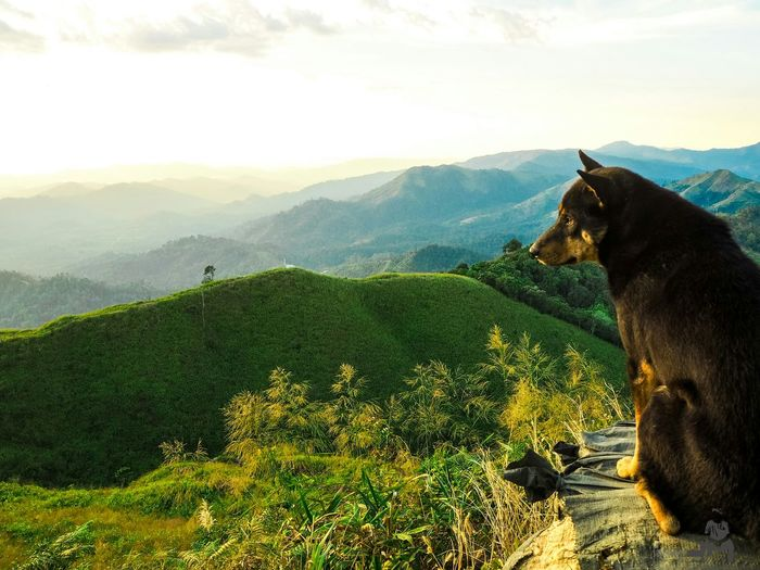 Dog Mountain Landscape Nature Outdoors Beauty In Nature Travel Holiday