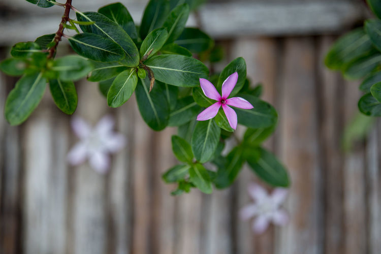 Leaf Plant Part Plant Growth Green Color Flowering Plant Flower Freshness Close-up Beauty In Nature Vulnerability  Fragility Nature Focus On Foreground Day Petal No People Inflorescence Flower Head Outdoors