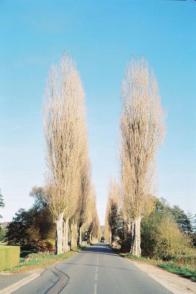 Poplars Argentique Believeinfilm Carmencita Film Lab Film Film Photography Filmisnotdead France Kodak Kodak Portra 800 Landscape Normandie Ouilly-le-Vicomte Poplars Road Trees