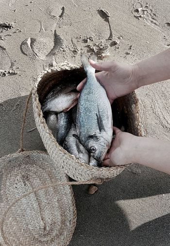 Beach Sand Animal Themes Nature Leisure Activity Sea Life Healthy Eating Fishes Freshness Crustacean Vacations Fishing Pole Outdoors Food Stories Business Stories