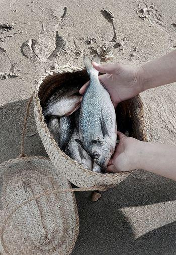Close-up of hand holding fish at beach
