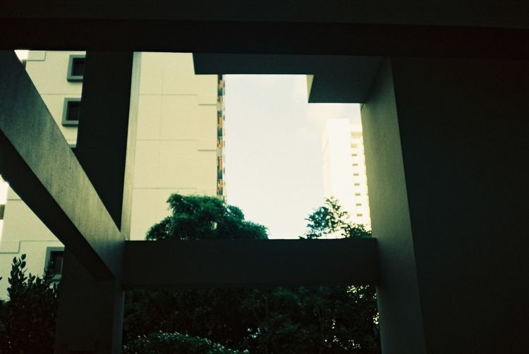 Architecture Building Exterior Built Structure Close-up Day Growth Indoors  Light And Shadow Nature No People Singapore Sky Tree Window