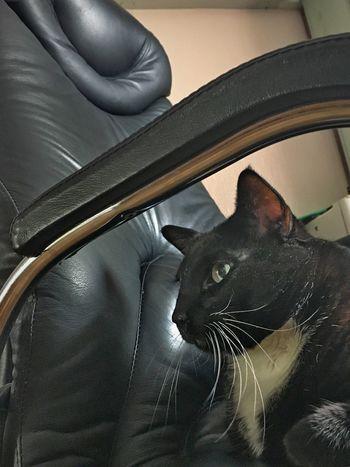 Cat♡ Cats Cat My Cat