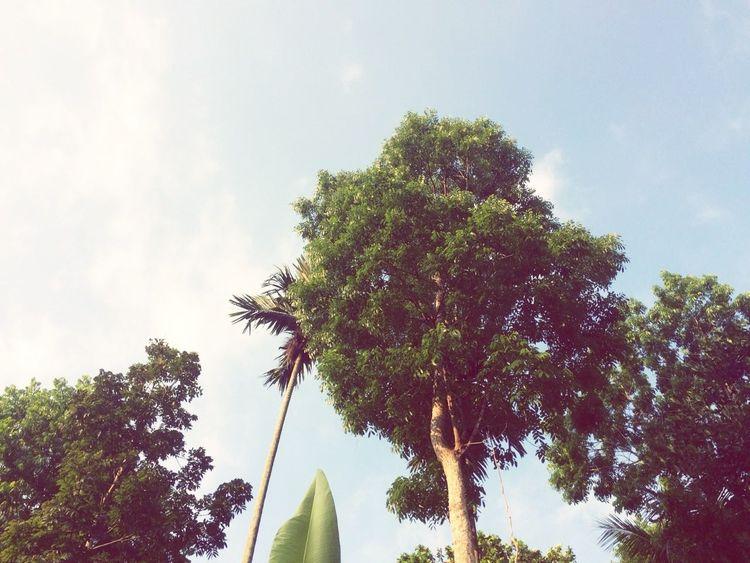 sore Tree Branch Palm Tree Leaf Sky Cloud - Sky Plant