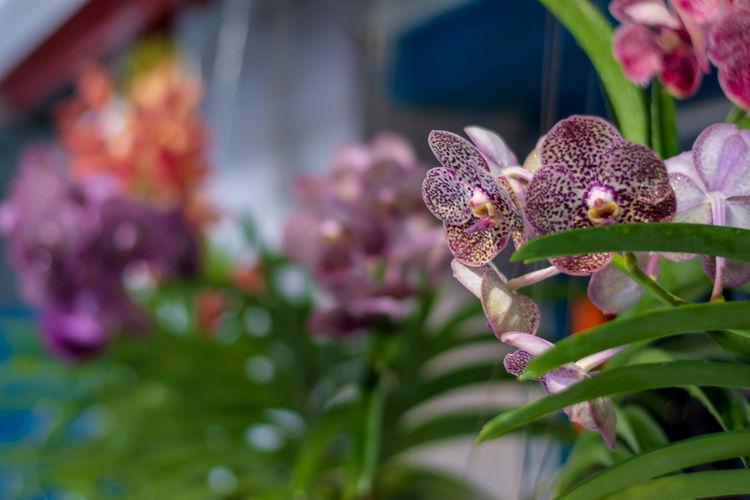 Close up Purple