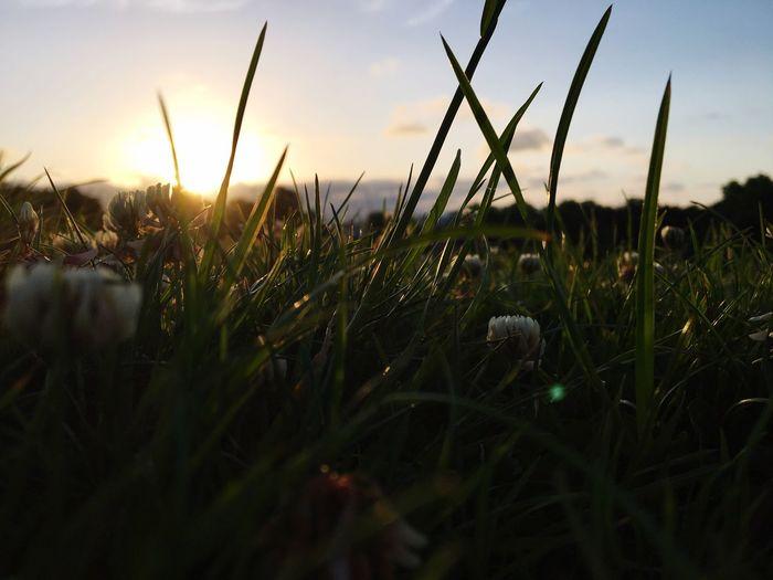 Sunrise Field Beauty In Nature No People Primrose Hill First Eyeem Photo
