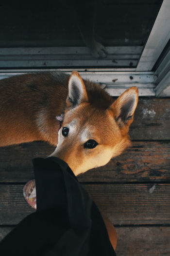 High angle view of dog and person on porch