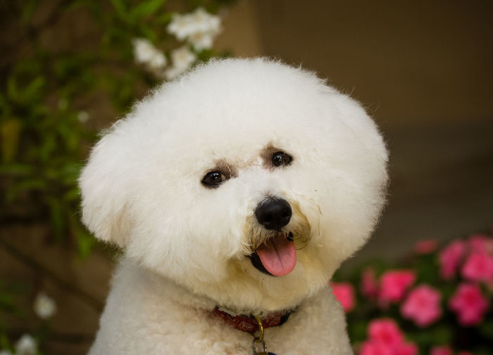 Close-Up Portrait Of White Dog Standing Outdoors