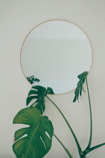 Close-up of green leaves on table against wall