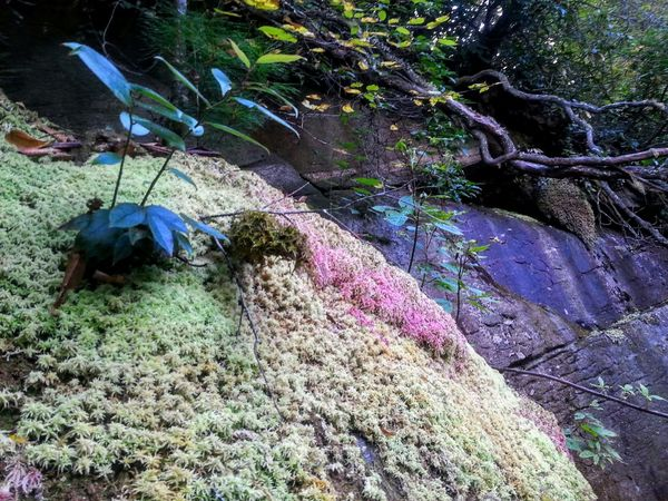 Moss & Lichen Check This Out Mountain Hiking From My Point Of View Fall 2015 Great Outdoors Nature_collection EyeEm Nature Lover Landscapes With WhiteWall