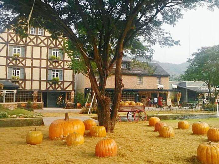 Pumpkin Tree Building Exterior Agriculture No People Architecture Sunnyday☀️ Relaxing View Outdoors, Outside, Open-air, Air, Fresh, Fresh Air, Windy Day Park Pumpkin Season Farms Farmlandscape