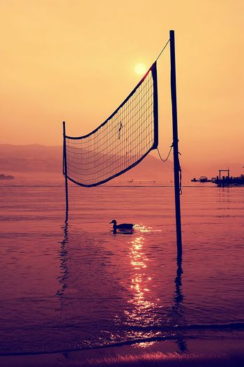 Duck Swimming Under Volleyball Net At Sea Shore During Sunset