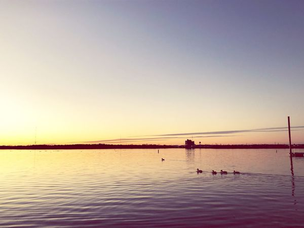 Birds Lake No Filter Water Copy Space Sunset Nature Clear Sky Silhouette Scenics Sky