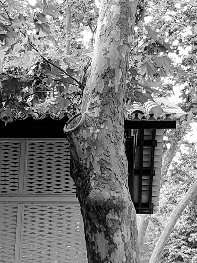 Low angle view of tree against built structure