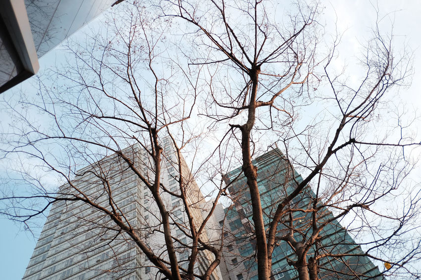 Architecture Bare Tree Beauty In Nature Branch Building Exterior Built Structure Day Low Angle View Nature No People Outdoors Sky Tree Winter