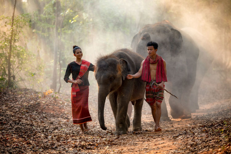 Elephant family in Surin walking in forest at Chang village and elephants Surin, Thailand. Chiang Mai | Thailand Thailand Woman Adult Couple - Relationship Cultures Day Domestic Animals Dust Elephants Forest Front View Full Length Males  Mammal Men Mensfashion Nature Outdoors People Standing Togetherness Tree Young Adult