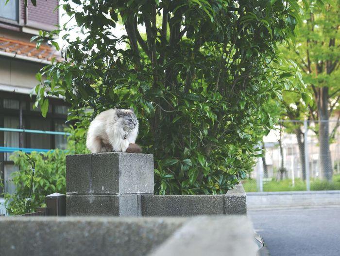 I see. Cat Whitecat BlueEyes Green Nature White View Cool Animal Japan 猫 白猫