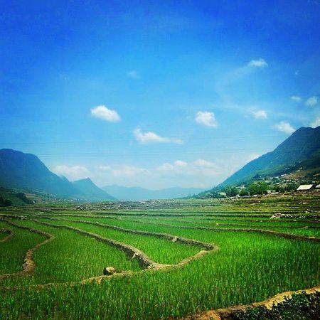 Sapa Rice Valley Sapa Vietnam Trekking Travel Ricepaddies Blue Green Picturesque