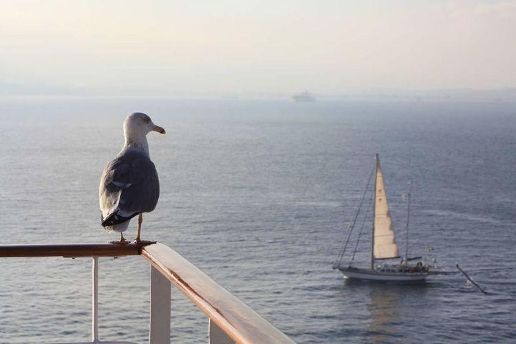 Open sea Sailing EyeEmNewHere Horizon Over Water Boat Sea Bird Ocean Sailing Boat
