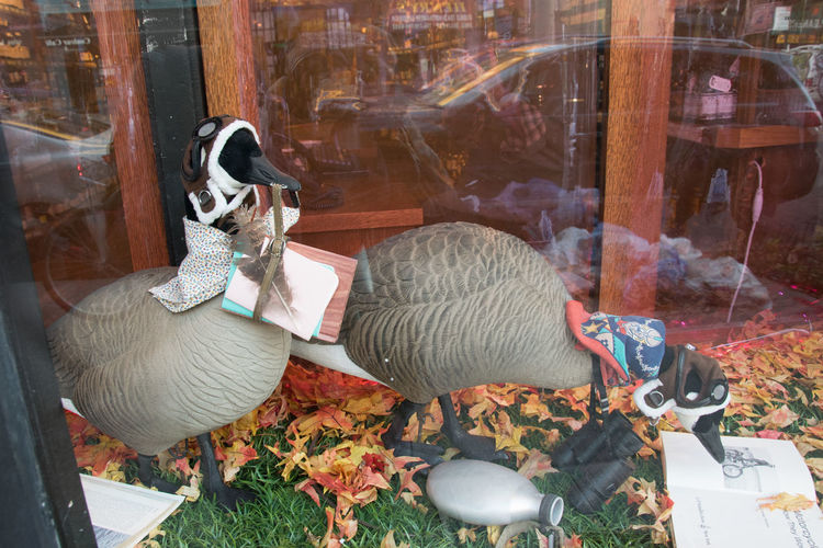 Our local wine store often has good window displays. I love the new one. Canada geese in goggles and aviator helmets, reading books about birds/ducks. Birds Brooklyn Canada Geese Funny FUNNY ANIMALS Geese Goose Makes Me Laugh Park Slope Too Funny Urban Window Display Wine Store
