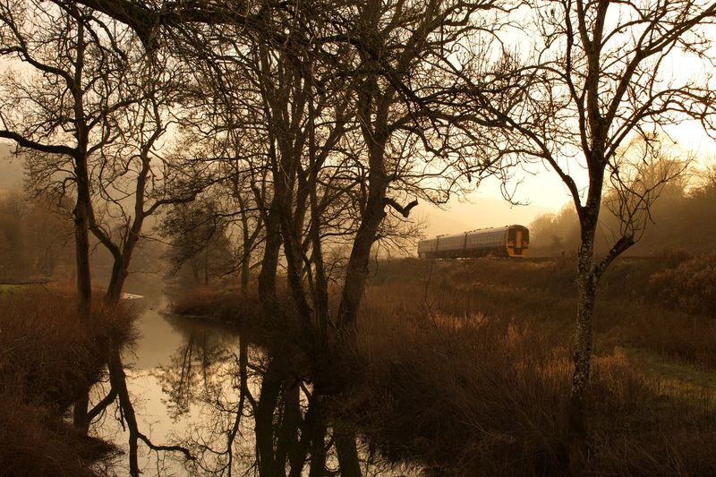 Reflections Railway Train Tree Bare Tree Nature Tranquility Branch Fog Outdoors Beauty In Nature Water
