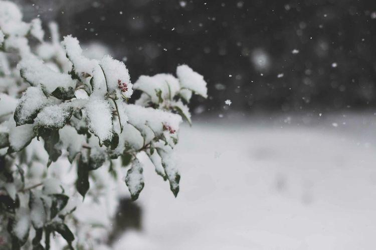 VSCO Snow