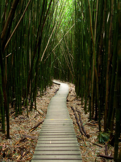 Hawaii Maui Direction The Way Forward Forest Tree Land Plant Tranquility No People Nature Growth Bamboo - Plant Footpath Day Boardwalk Wood - Material Beauty In Nature Bamboo Bamboo Grove WoodLand Tranquil Scene Outdoors Diminishing Perspective Long