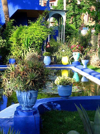 Enjoying The View Beautiful Marrakech Majorelle Blue Popular Photos Taking Photos EyeEm Nature Lover Garden Flowers,Plants & Garden