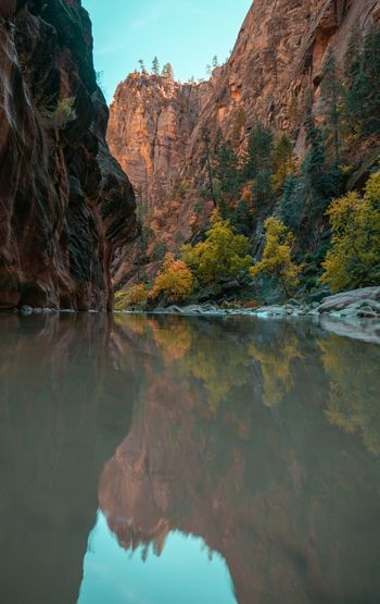 Greens USA Utah Zion National Park Water Beauty In Nature Reflection Mountain Tranquility Scenics - Nature Nature Tranquil Scene Rock Tree Rock - Object Rock Formation Outdoors