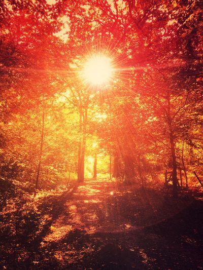 Golden Brown... Tree Autumn Autumn Colors Autumn Leaves Autumnbeauty Autumn Trees Fall Fall Beauty