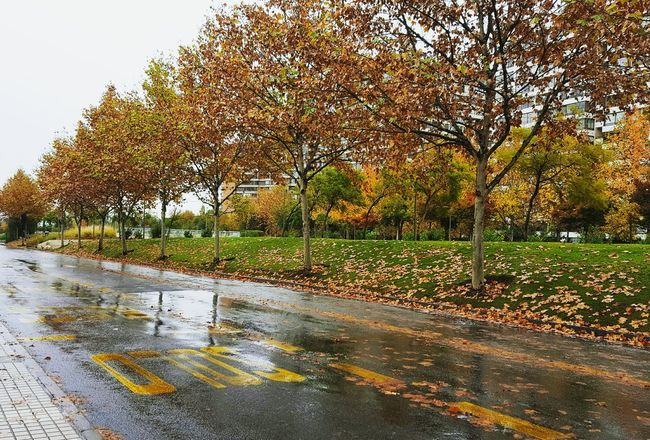 Otoño, outum, fall, lluvia, winter, cool Hojas Secas Day Water Nature Outdoors Beauty In Nature Reflection Tree Wet Accidents And Disasters Puddle No People Flood Sky Oil Spilltree street