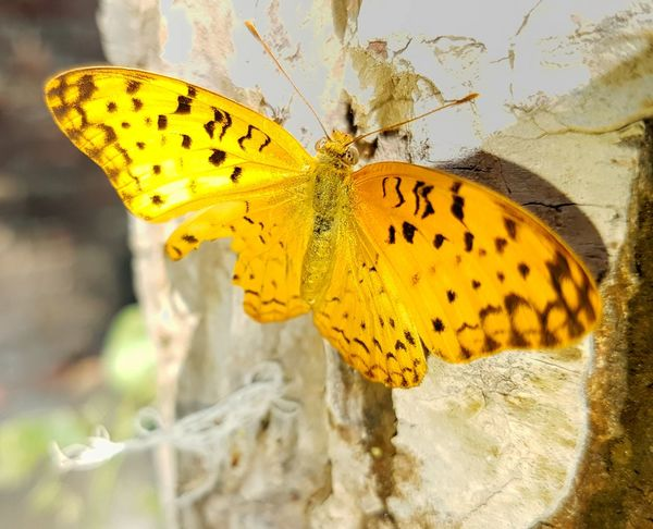 Insect Butterfly - Insect Animal Wildlife Animals In The Wild Animal Themes Yellow One Animal No People Close-up Beauty In Nature Fragility Nature Full Length Outdoors Side View Perching Day Spread Wings Freshness