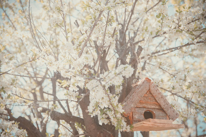 BIRDHOUSE IN A PLUM TREE IN THE GARDEN OF MY HOUSE Architecture Beauty In Nature Birdhouse Botany Branch Day Flower Flowers Nature No People Plant Tranquility Tree Tree House Woodenhouse