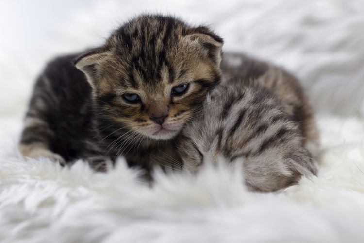 Close-up of a kitten