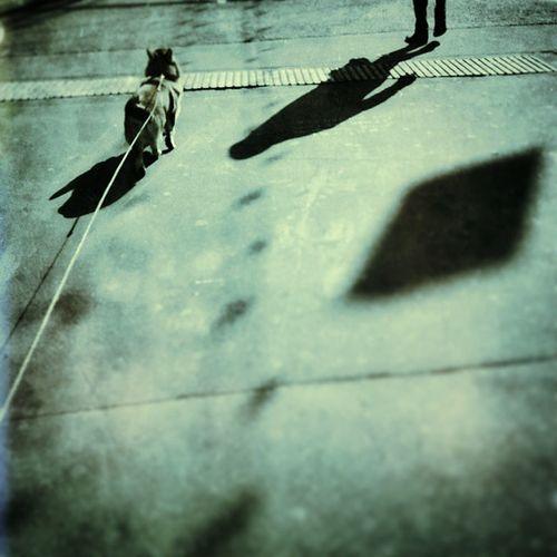 Walk with evening sun Snapseed Dogsinthecity Citydog Urbandog shadows lomography