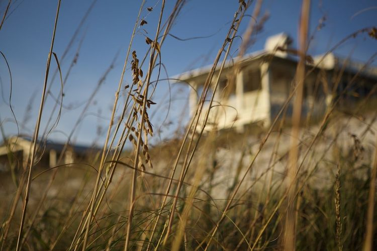 Beauty In Nature Blade Of Grass Focus On Foreground Grass Outdoors Seaside Fl Straw Tranquility