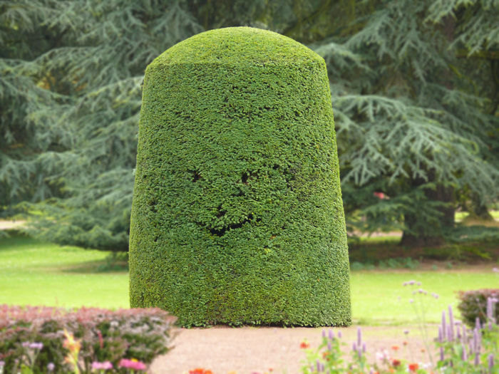 Beauty In Nature Close-up Day Focus On Foreground Formal Garden Garden Grass Green Color Growth Hedge Moss Nature No People Outdoors Park - Man Made Space Plant Smiling Tree Solid Stone Topiary Tranquility Tree