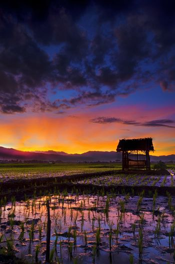Ricefields Ricefield View EyeEm Selects Outdoors Mountain No People Nature Landscape Sky Growth Field Day Orange Color