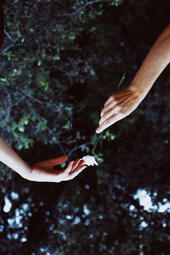 Directly below shot of cropped hand giving flower to woman