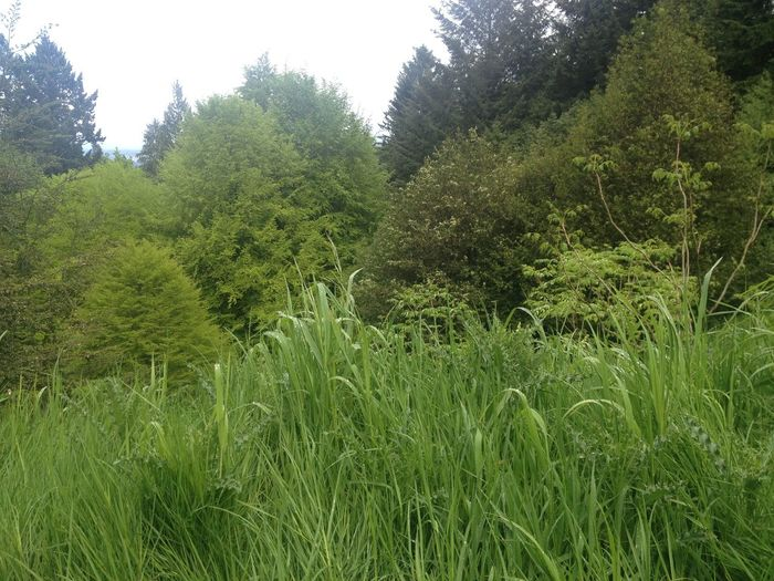Trees Grass Nature The Environmentalist – 2014 EyeEm Awards