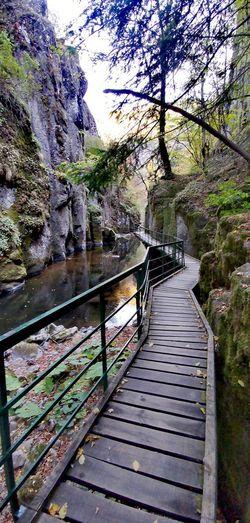 Footbridge amidst trees on mountain