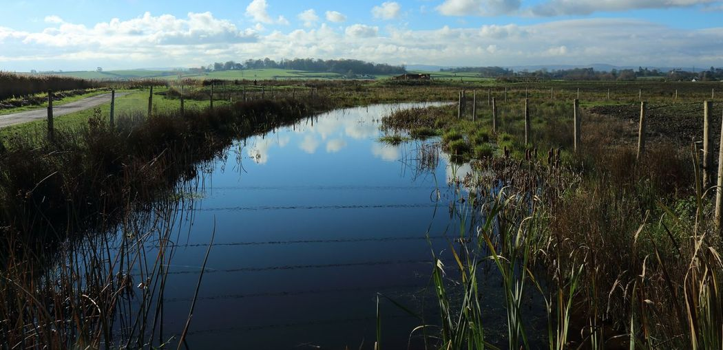 Marshes Nature Nature Photography Nature Reserve Naturelovers Outdoors Steart Steart Marshes