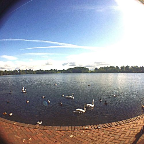 A Lake Somewhere in Birmingham Brimingham At The Park Nature_collection