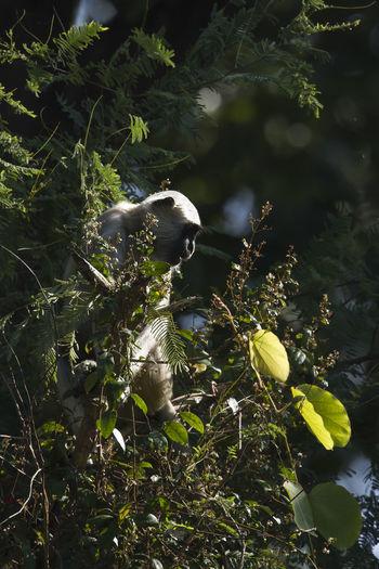 View of bird on branch