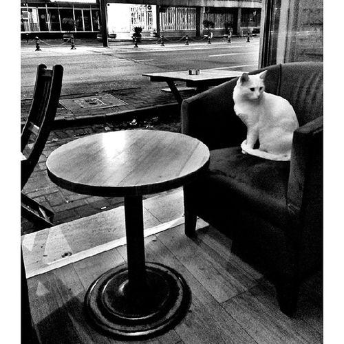 """""""ben ki çağ dışı bir uyumsuzluk delisi, kendi ipimi belki kendim çekerim. gölgeme dadanmış bir tuhaf güz kedisi , her yere peşimden onu da sürüklerim """" Metinaltıok Istanbul Kedi Siyahbeyaz Monokram Gece Kedi Besiktas Yalnızlık Cihangir Huzur Beyazkedi Night Cat in Pub Monochrome Blackwhite Istanbulkedileri Aylinmoon"""