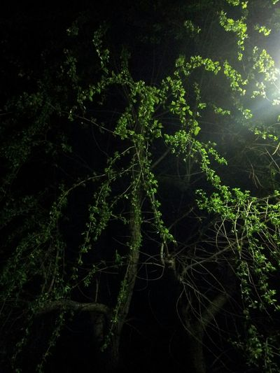 Close-up of tree at night