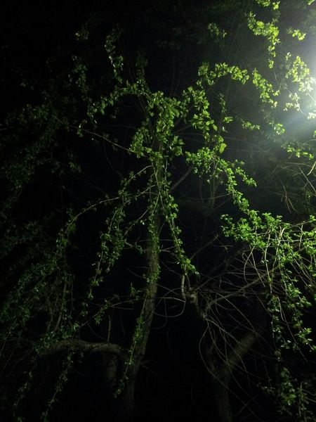 Green Color Tree Leaves_collection Leaves🌿 Night View Light And Shadow Light