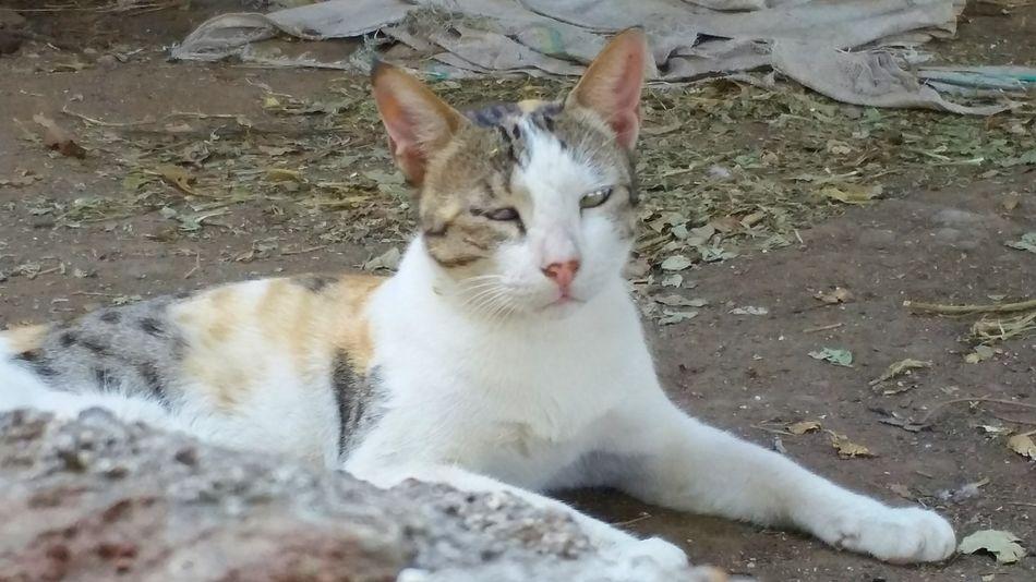 White cat Cat Cute Cat Animal Themes Domestic Cat Pets White Kitten Cute Pets Cute Cat.  Shadow
